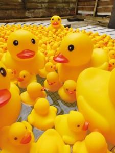 アヒル風呂2